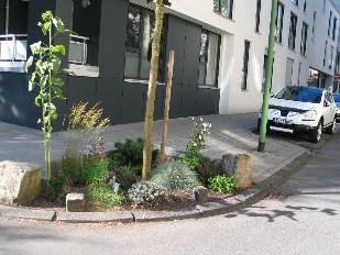 Wunderbar gestaltete Baumscheibe - Foto Peter Kayser - IMG_0631