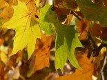 leaves-10706_640